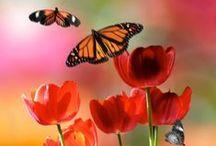 Butterflies ♥
