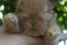 Cute Animals / They are sooooo cute!  #cuty  #cute  #cutepets