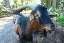 Farm Photos by Homemade Stew / Homemade Stew's photos from the Wild Things Petting Farm. Hope you enjoy!