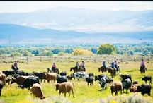 True Spirit of the West / Yes, the Brush Creek Ranch is a luxury guest ranch--but it is also a working cattle ranch, too. The history of this special property is very important to us, as well as adhering to traditional western values.