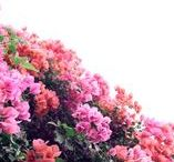 Flowers & Gardens / Discover the best places to find flowers, plants, succulents and gardens in the San Francisco Bay Area