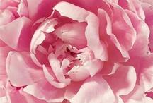 Fleur / Photos de fleurs / by Les Boutiques Top