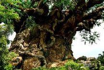 - Trees -