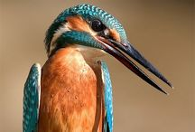 Wild Life / Wild birds, nature creatures
