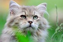 koty cats / koty,różne rasy
