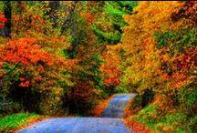 jesień  Autumn / jesień  Autumn