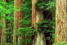 drzewa tree  / drzewa tree
