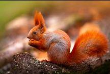 wiewiórki squirrels / wiewiórki squirrels