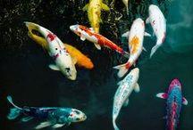 ryby fish / ryby fish
