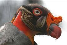 ptaki birds / ptaki birds