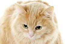 koty rude / by Elżbieta Lemiech