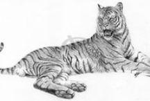 animals rysunek ołowkiem / animals rysunek ołówkiem