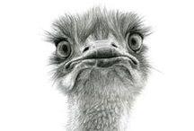 ptaki rysunek ołowkiem / ptaki rysunek ołówkiem