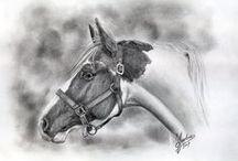 konie rysunek ołówkiem / konie rysunek ołówkiem