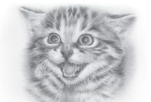 koty rysunek ołówkiem / koty rysunek ołówkiem