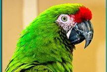 papugi parrots / papugi parrots