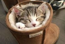 Kissanpennut / Kittens