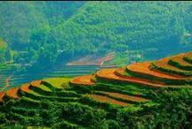 Azja rice fields / Azja rice fields