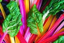 warzywa vegetables  / warzywa vegetables