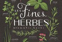 Yrtit / Herbs
