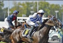 #HORSES + #RACES