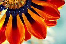 Flora ✿ / Plants - Flowers - Trees