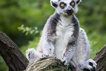 Madagascar ✈
