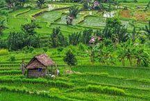 Indonesia ✈ / Bali
