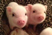 Animals / Adorable (mostly baby) animals. I have a farm with sheep, chickens, and pigs, so I have been around animals for a while and love them a lot. / by olivia geppel