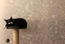 Katzenspielplätze / Wohnen mit Katzen