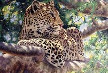 Cats / Pictures wild cats