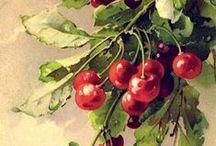 Fruit / watercolor drawings: fruits, berries ...