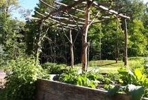 Garden Inspirations / by feral gardener