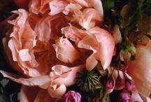 Toutes les jolies fleurs  / by Pamela Libonati