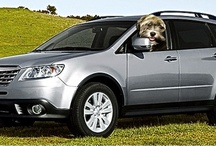 Subaru: Dog Tested. Dog Approved.™ / by BlogPaws Team