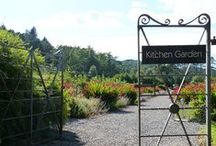 Kitchen Garden / At The Torridon, we grow many of our own ingredients in our kitchen garden to use in the hotel and inn.
