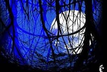 The Moon... / by Donna Griffiths