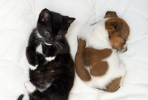 """Cats and Dogs! / """"We can judge the heart of a man by his treatment of animals."""" – Immanuel Kant"""