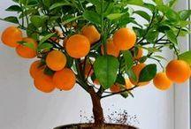 FRUIT TREE~~ LOVE THEM!!