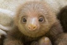 Sloths / by Donna Griffiths