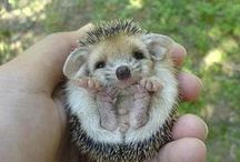 Hedgehogs... / by Donna Griffiths