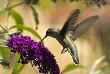 Hummingbirds... / by Donna Griffiths