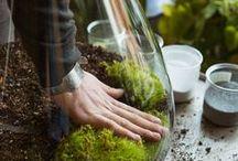 vivarium / glass / bonsai