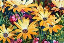 bloemen/bomen