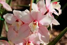 Orchids / by Haviva Ivry