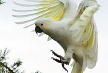 Parrots / by Haviva Ivry