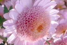 Flowers / by Haviva Ivry