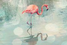 Flamingos / #flamingo