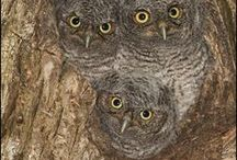Owls, you know / Real and surreal owls