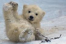 Nature - Baby animals / The wonder of birth